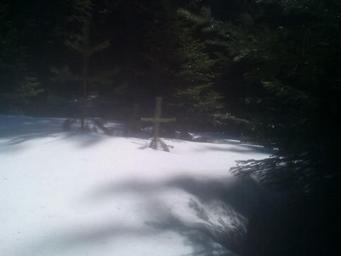 Кръстовата елха в местността Валого.